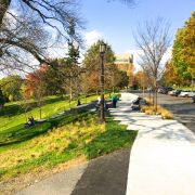 Cornell Sesquicentennial Grove